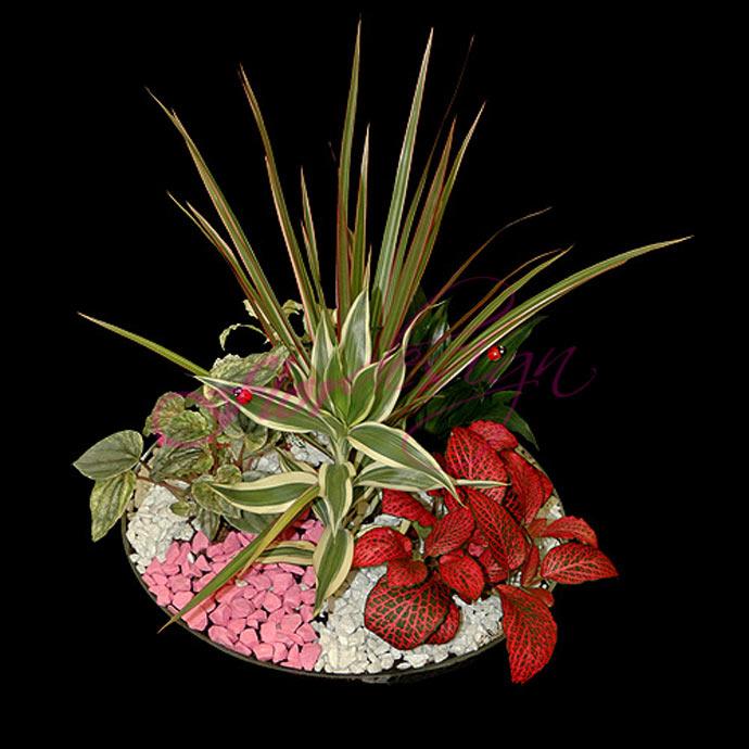 Долгоцветущие садовые цветы с фото